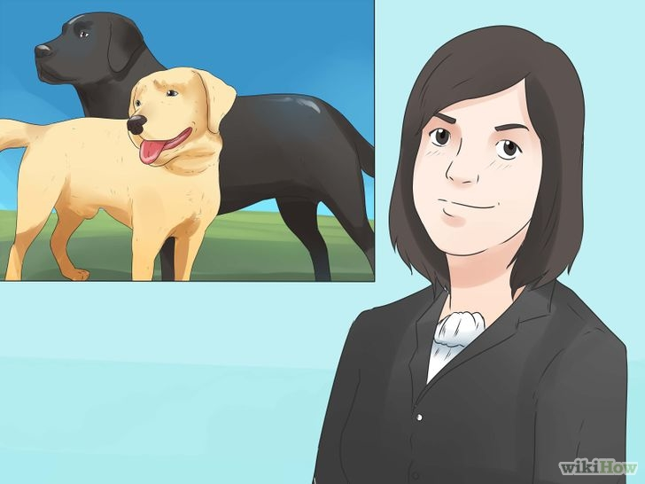 728px-Train-Your-Puppy-Step-5-Version-2