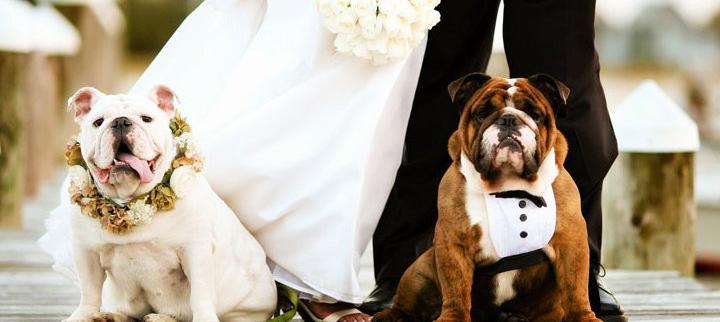 cães_em_casamento_capa-2